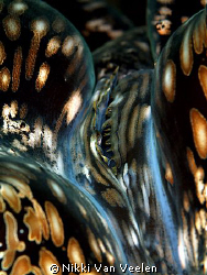 Giant clam taken at Nabq Park with E300 and 105mm lens. by Nikki Van Veelen 